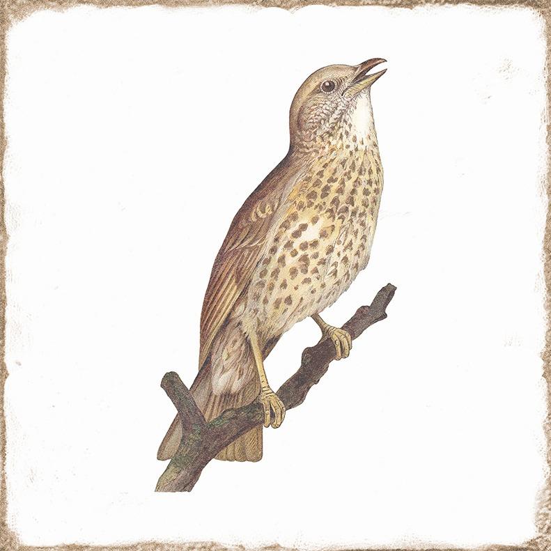 -FORLI-BIRDS-MIX-DEKOR-15X15–10174475