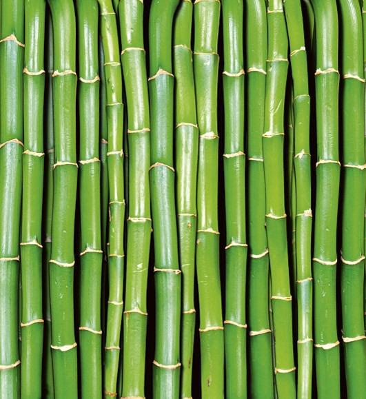 BambooMS-3-0165