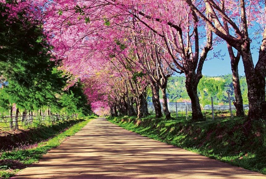 Blossom alleyMS-5-0106