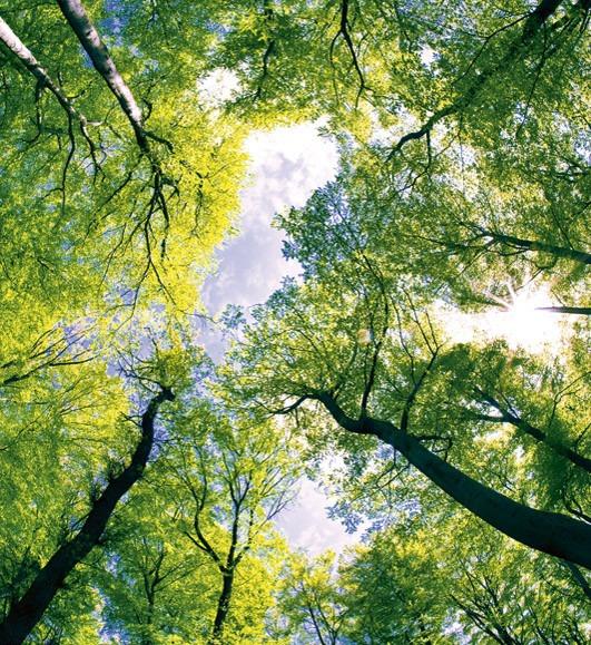 Trees MS-3-0104