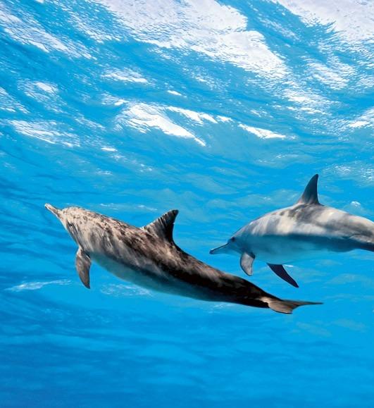 dolphinsMS-3-0218