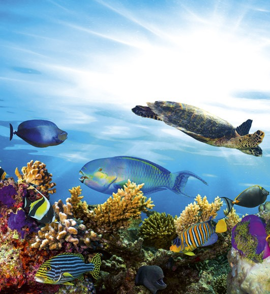 fishMS-3-0216