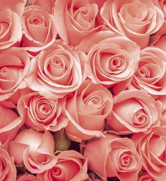 rosesMS-3-0133