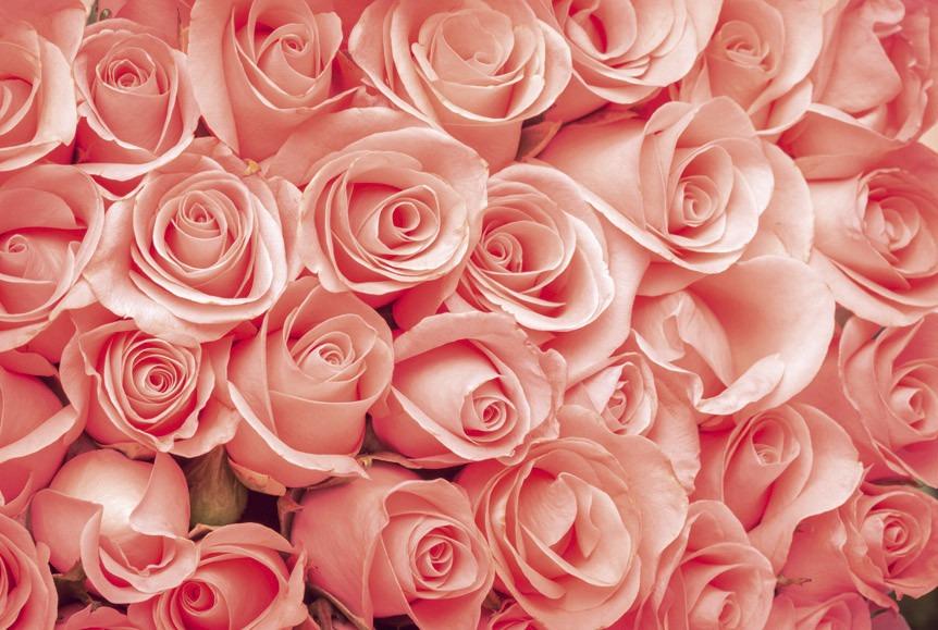 rosesMS-5-0133