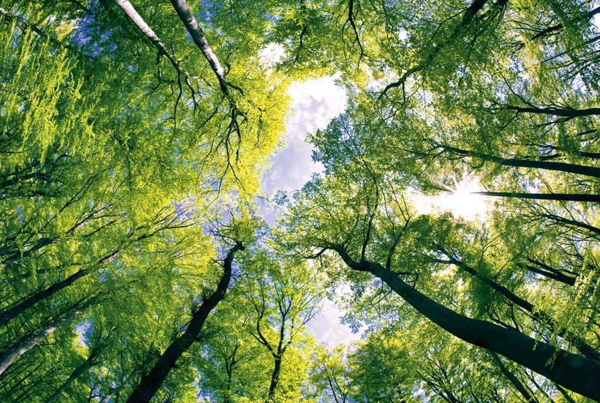 treesMS-5-0104