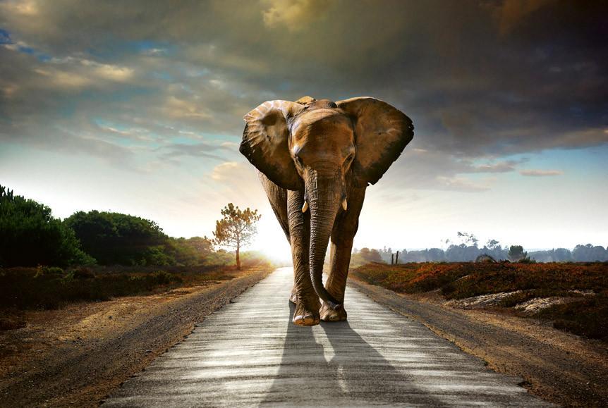 waling elephantS-5-0225